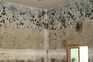 mould under proposed new tenancy law