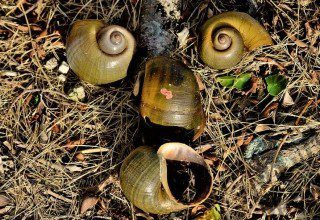Snail farms used to avoid paying business rates